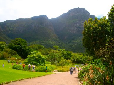 Looking across the gardens to Table Mountain
