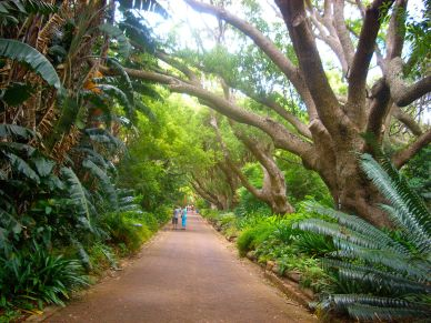 One of the Jurassic Park-like avenues to explore