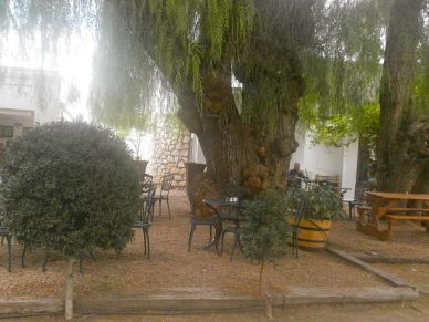 Chill out under the enormous old African pepper tree
