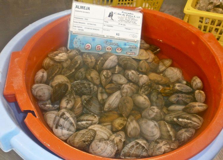 A bowlful of fresh clams (almeja)
