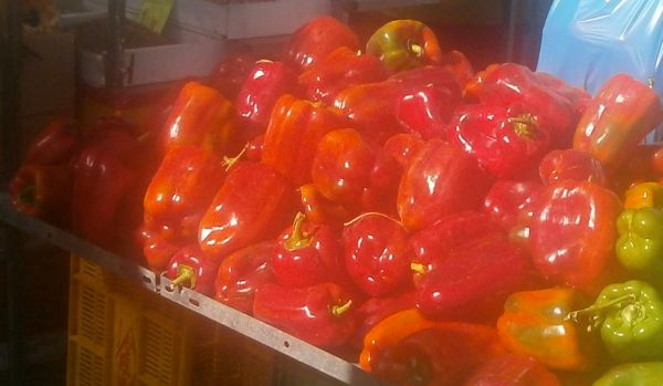 Huge red peppers glisten in the sunshine
