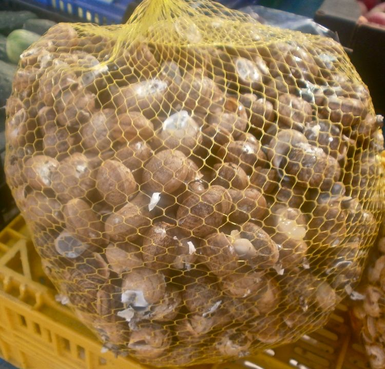 A large bag of live snails in the market