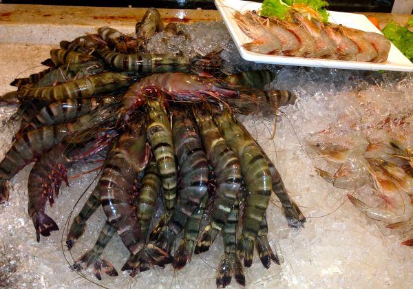 The display of huge, fresh tiger prawns